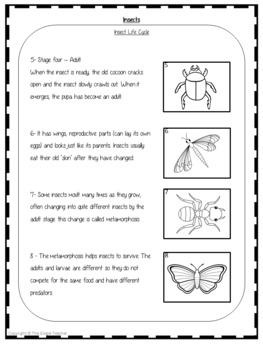 Insect Life Cycles Complete Science Lesson