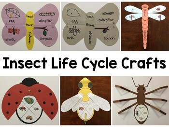 Insect Life Cycle Crafts Bundle ~ Butterfly, Moth, Ladybug, Dragonfly, & Bee