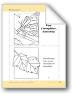 Insect Life Cycles: Take-Home Book