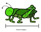 Insect Measure and Graph