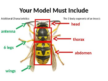 Insect Model Project