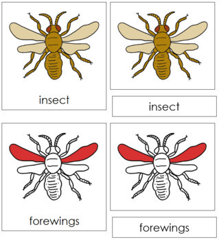 Insect Nomenclature Cards (Red)