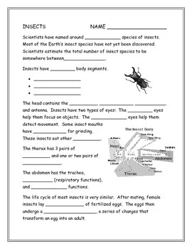 Insect Note Taking