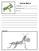 Insect Note Taking Pages