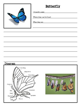 Insect Note Taking Pages {Group 2}