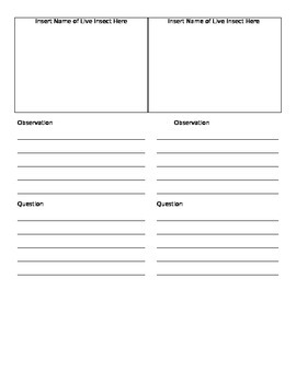 Insect Observation Recording Worksheet