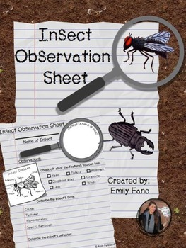 Insect Observation Sheet FREEBIE
