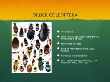 Insect Orders PowerPoint