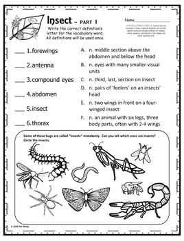 Insect Part 1 Assessment