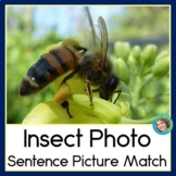 Insect Photo Sentence-Picture Match Reading and Science Center