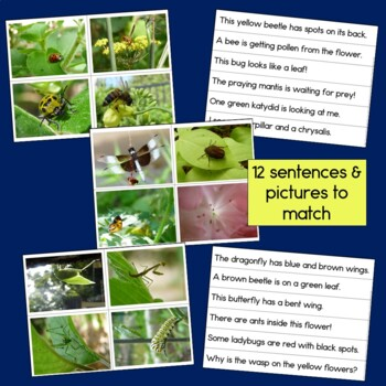Insects sentence picture match reading center with photographs