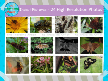 Insect Photographs Set 1