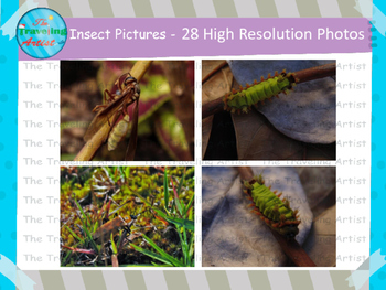 Insect Photographs Set 2