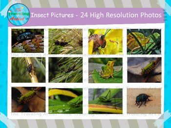 Insect Photographs Set 3