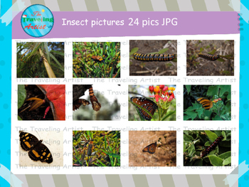 Insect Photographs Set 4