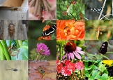 Insect Pictures/Photos 2 - - Clip Art Pack for Commercial Use