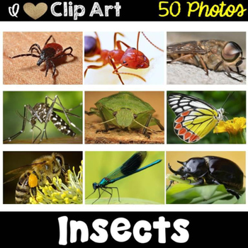 Insect Photos