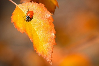 Insect Pictures/Photos - Clip Art Pack for Commercial Use