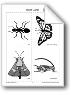 Insect Picture Cards