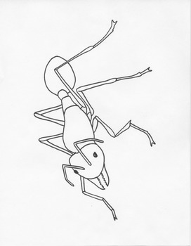 Insect Printables Full-Page Templates / Coloring Pages for ALL Subjects & Grades