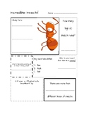 Insect Project