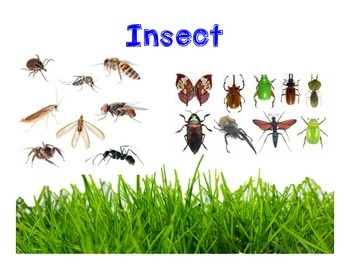 Insect QR Sorting