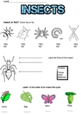 Insect Quiz or Worksheet