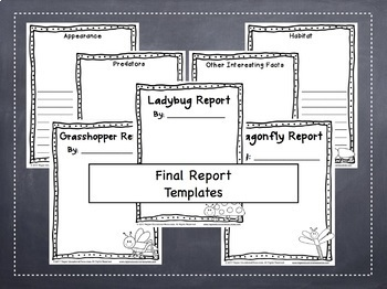 Insect Report: NO PREP Jot Notes, Draft and Final Copies