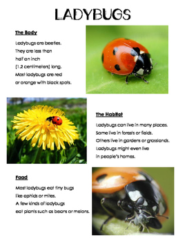 Insect Research Fact Sheet