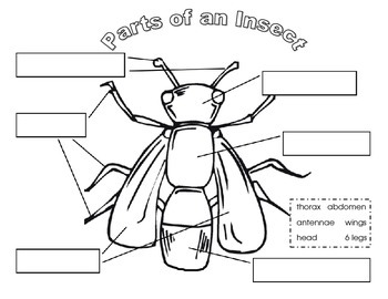 Insect Science Pack