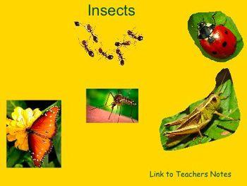 Insect Smart Board Lesson