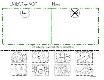 insect sort by kindergarten friends teachers pay teachers. Black Bedroom Furniture Sets. Home Design Ideas
