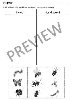 Insect Sorting Graph Worksheet