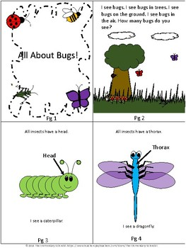 Insect Study: All about Bugs!