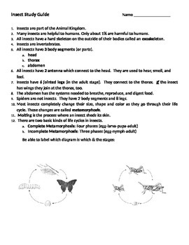 Insect Study Guide, Quiz, & Answer Key