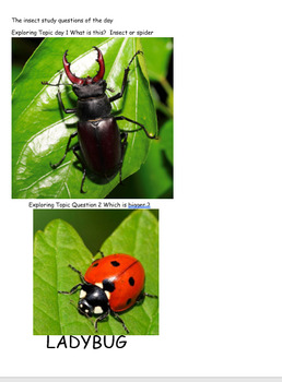 Insect Study Questions of the Day Pictures Gold Creative Curriculum
