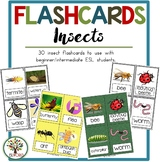 Flashcards Insect Illustrations