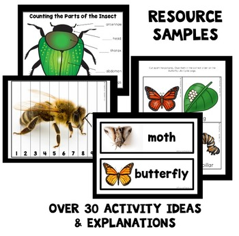 Insect Theme Preschool Classroom Lesson Plans