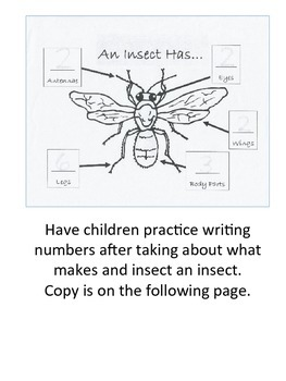 Insect Themed Project & Ideas