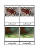 Insect Three Part Cards