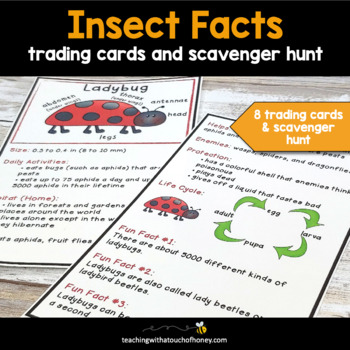 Bugs and Insects Activities - Trading Cards For Insect Report