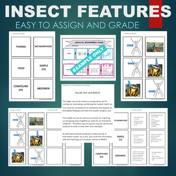 Insect Traits (Thorax, Compound Eye, Abdomen, etc) Sort & Match Activity