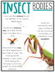Insect Unit | All About Insects
