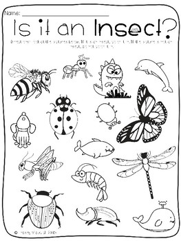 Insect Unit (Science Lessons ONLY)