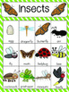 Insect Vocabulary Cards