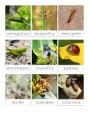 Insect Vocabulary-Montessori 3 Part Cards
