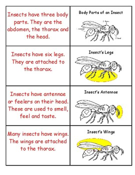 Insect Vocabulary Partner Cards