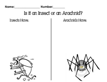 Insect Vs. Arachnid Compare and Contrast