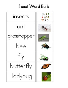 Insect Word Bank