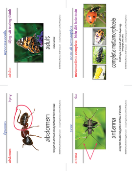 Insect Word Cards